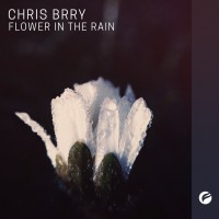 Chris Brry Flower In The Rain