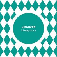 Jigante Infraspinous