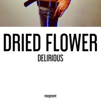Dried Flower Delirious