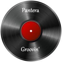Pantera Groovin\'